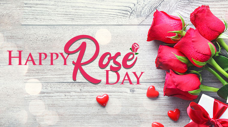 Rose Day : Wishes, Quotes, SMS, Messages, Status, Greetings, Images